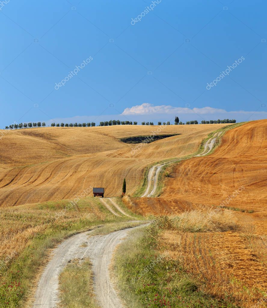 Rural road through seasonal field of summertime Tuscany, Italy, Europe