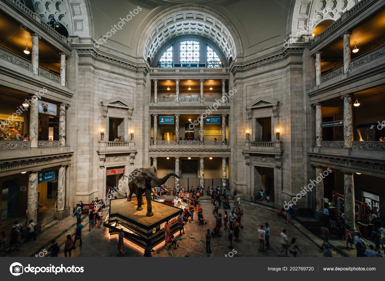 Museo Smithsonian.Interior Smithsonian National Museum Natural History Washington