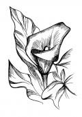 Kézzel rajzolt fekete-fehér virágok.