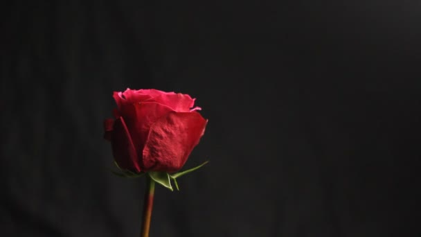 Red rose bud on a black blurred background. white smoke from a hookah envelops the flower. close-up