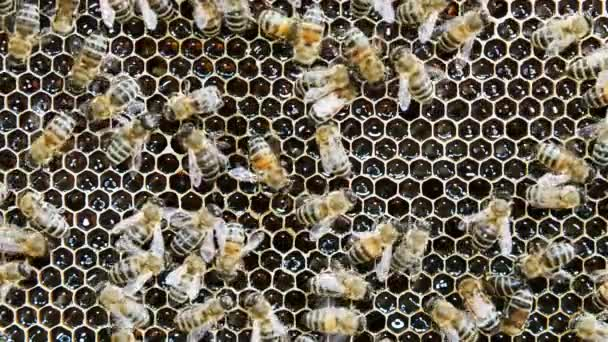 Bees produce honey in the hive. View of the hive from the inside.