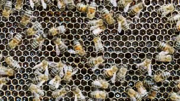 Méhek termelnek mézet a méhkas. A kaptár nézete belülről.