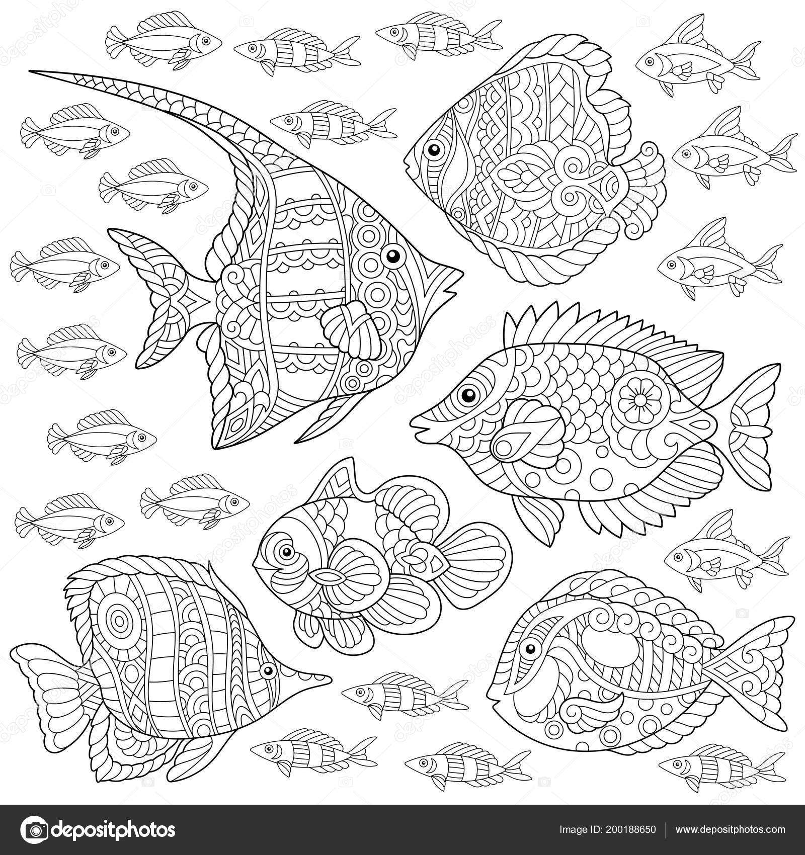 raccolta pesci tropicali disegno colorare quadro colorare