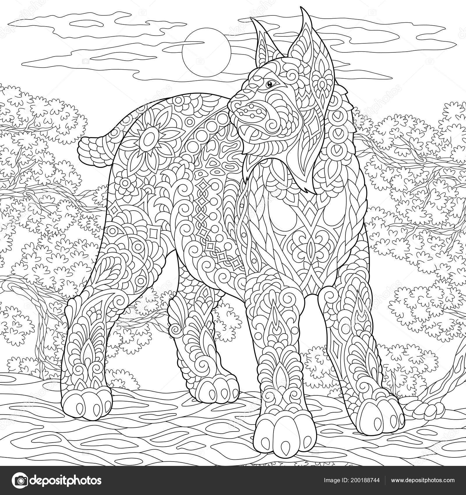 Wildcat Coloring Page Colouring Picture Adult Coloring Book Idea ...