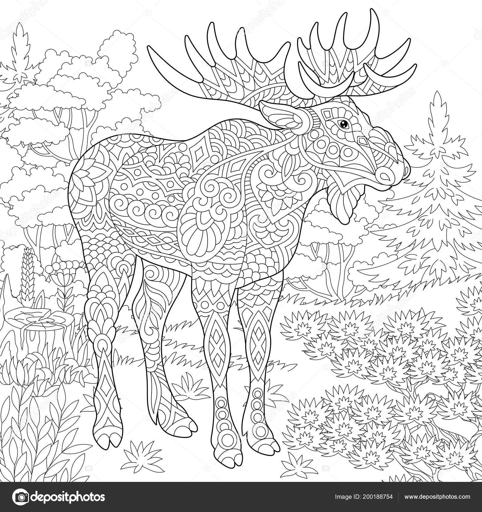 pictures printable moose  moose woodland animal forest