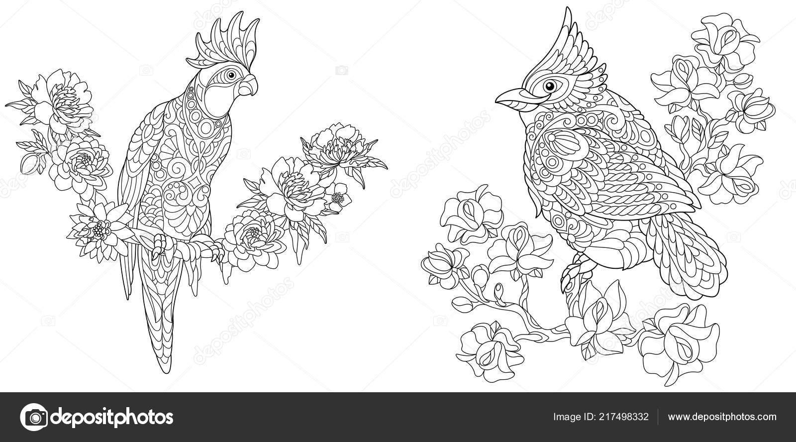 malvorlagen malbuch für erwachsene ausmalbilder mit kakadu