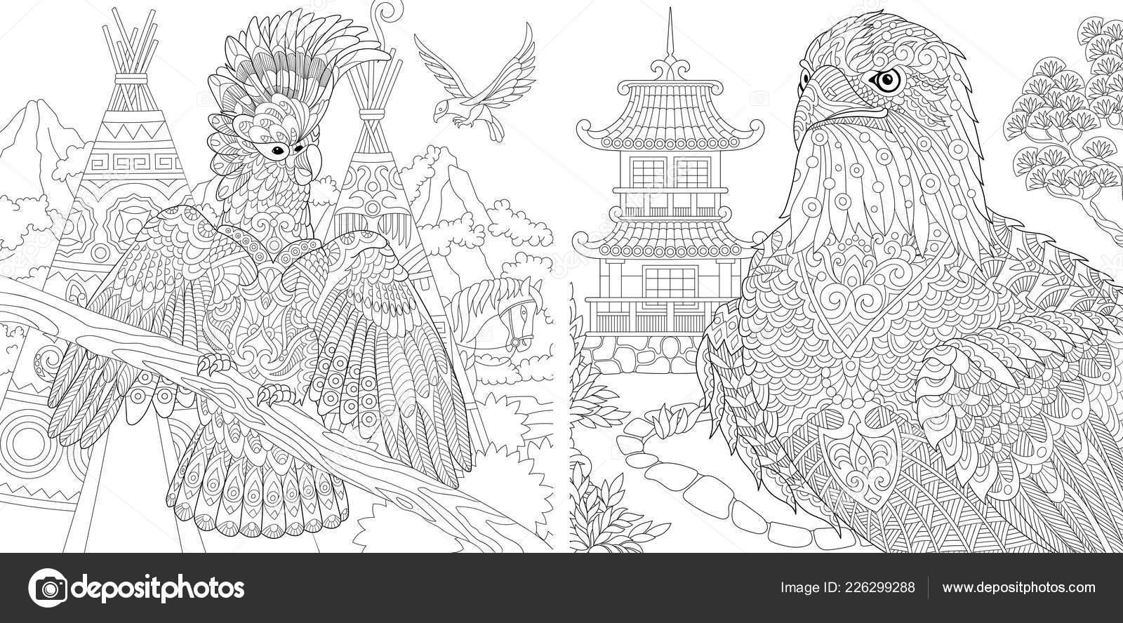 Malvorlagen Malbuch Für Erwachsene Ausmalbilder Mit Kakadu Und Adler