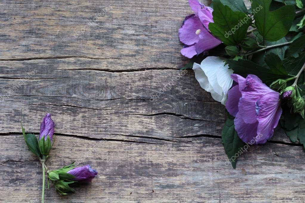 a bouquet of two purple flowers and one white, as well as two pawns are on a wooden background
