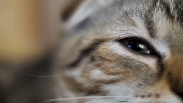 4 k közelről szem cirmos cica