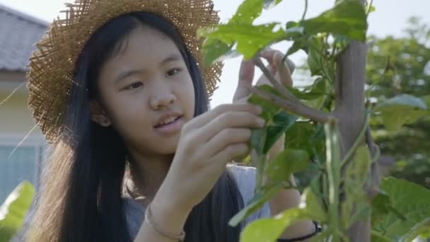 4K Pretty Asian farmer girl get rid of insect from vegetable