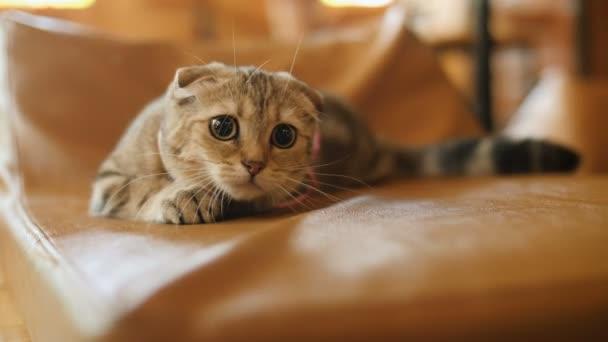 4k vicces izgalmas macska keres valami játék nagy szemmel