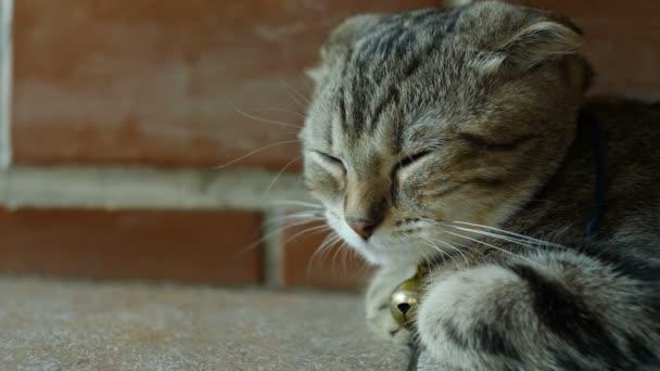 4 k roztomilé mourovatá kočka spí s sladký sen doma