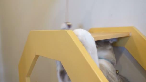 4k macska, kergeti, és játék-val egy macska játék, vicces macska pillanat