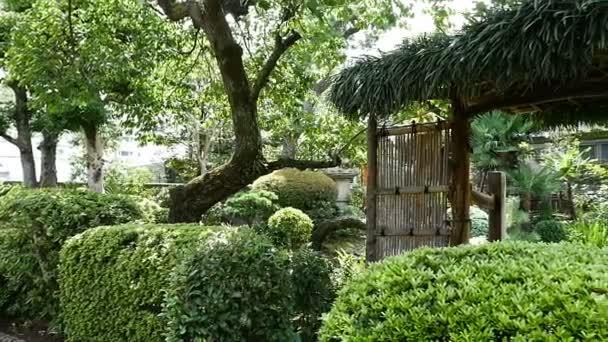 Zpomalený pohyb japonská zahrada jaro