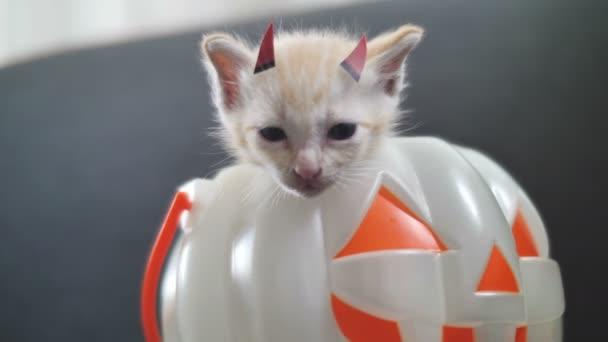 4 k aranyos cirmos cica leplezés belső rész a sütőtök vödör, Happy Halloween