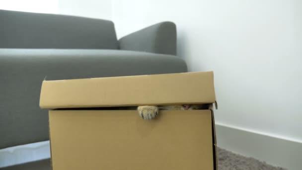 4 k roztomilé kotě skrývá uvnitř krabice
