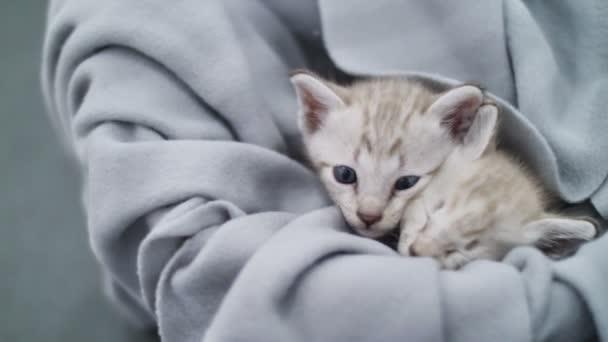 4 k szép cirmos cica játszik a ponyva alatt