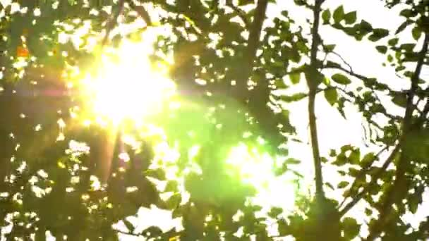 Krásné mimo zaměření západ slunce. Sun shine thorugh vane vítr strom listy. 4k kapesní světla s hrdlem