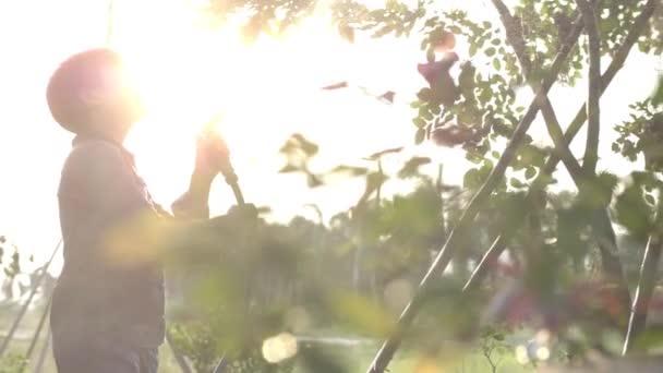 asiatischer Junge wässert Pflanzen im Garten mit Schlauch. Zeitlupe Kind mit Wasserspritzer mit Sonnenaufgang Fackel, Handschuss von glücklichen Jungen beim Spielen und Bewässern von Pflanzen im grünen Garten mit Schlauch.