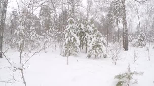 zimní krajina se stromy a sněhem