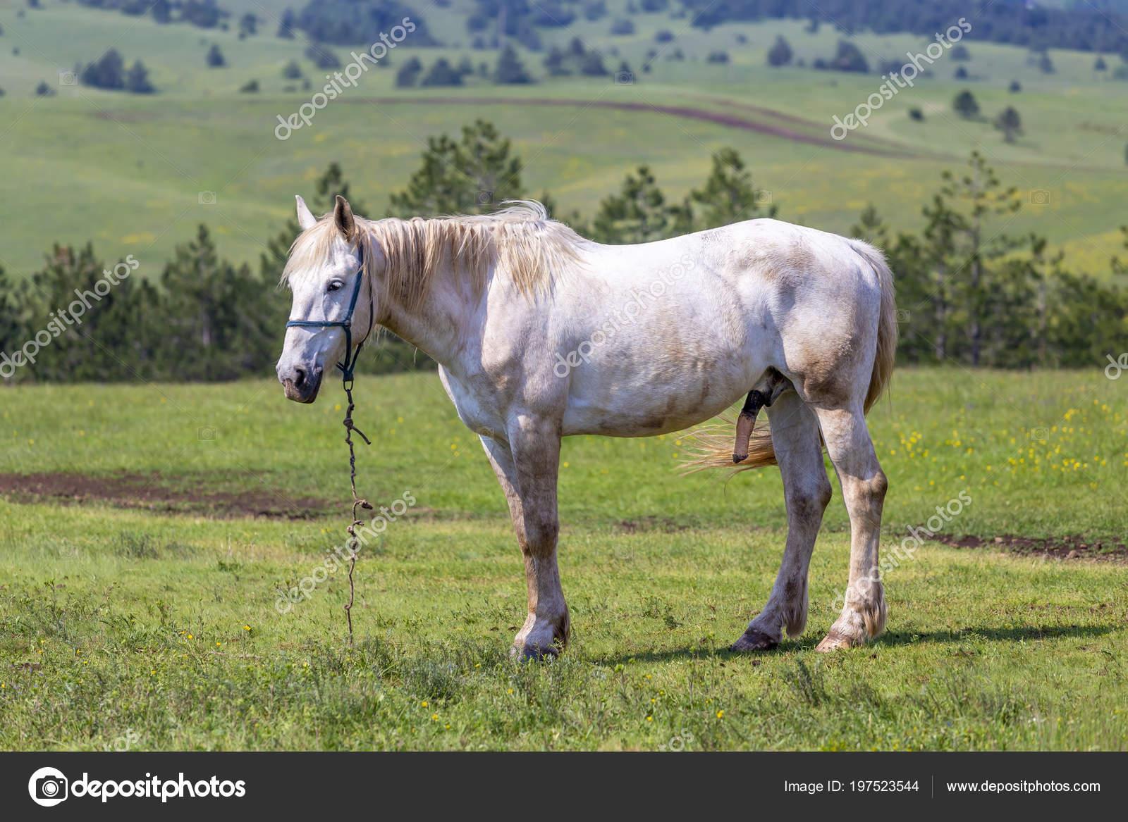 Видео про коня пенис скачать