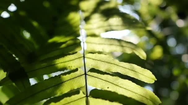A nap fénylik a páfrányzöld leveleken keresztül, lassított felvétel.