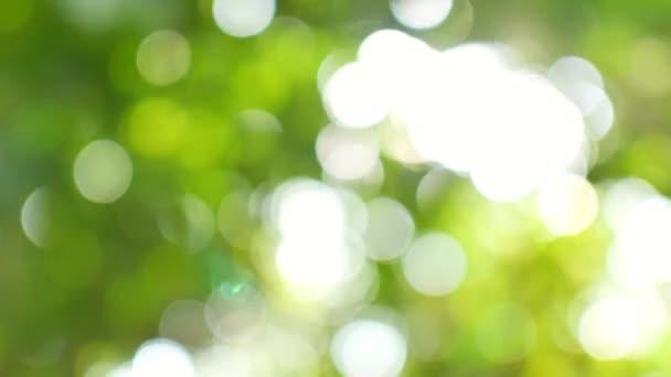 Abstraktní modravé pozadí zelených listů.