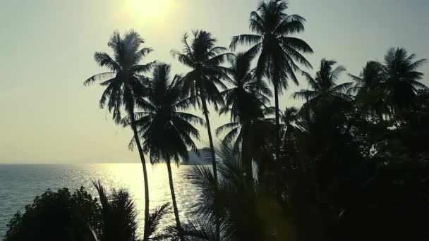 Krásné Ocean view západ slunce s dlaněmi