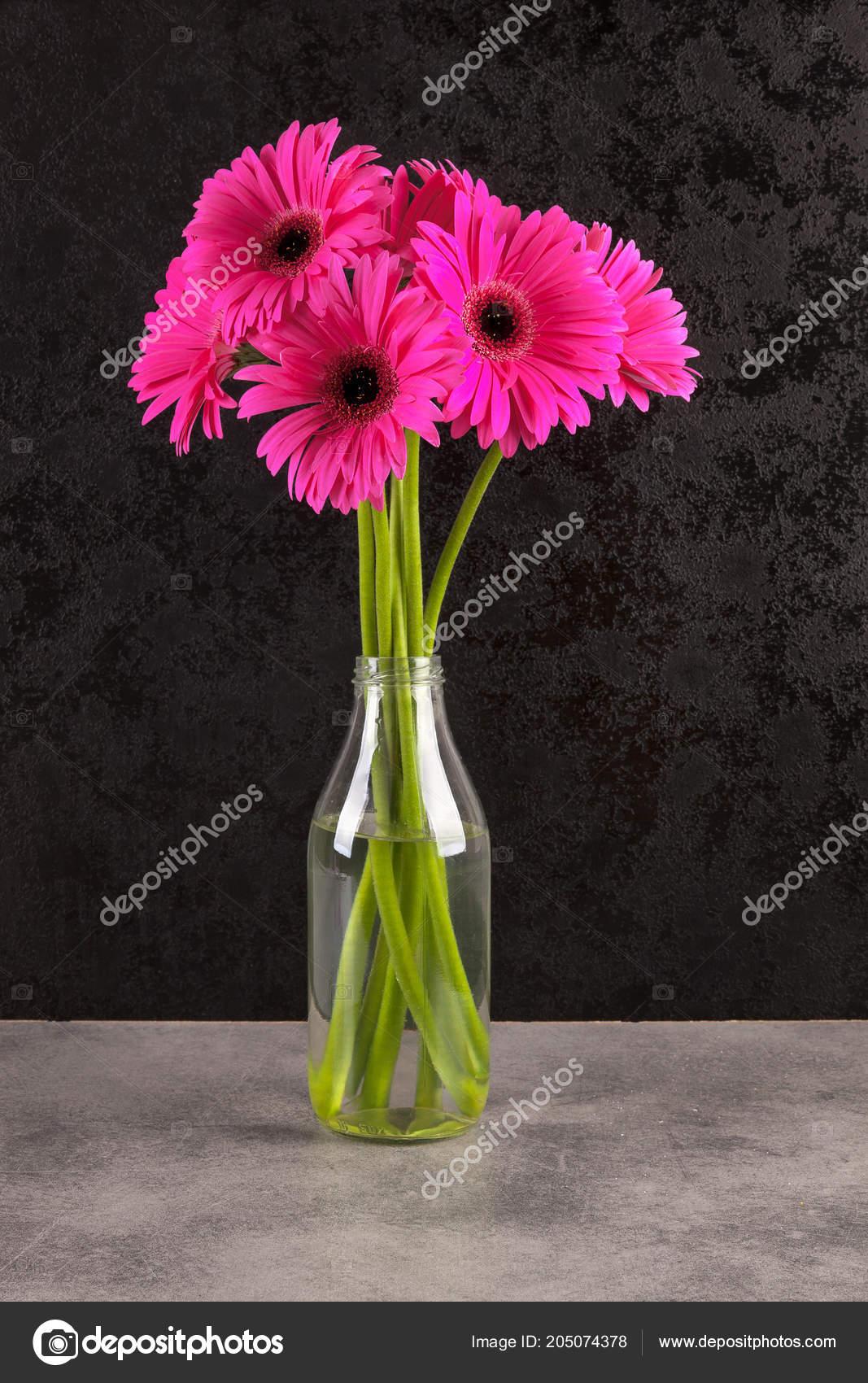 Gerbera Pink Flowers Vase Dark Background Stock Photo Image By C Eskymaks 205074378
