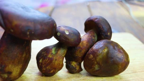Steinpilze auf dem Holztisch, thailändische Tao-Pilze genannt. wissenschaftlicher Name thaeogyroporus porentosus (berk. et. Besen )
