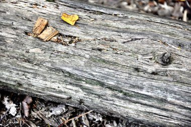old grey log texture ancient wood aged under sun and weathered b