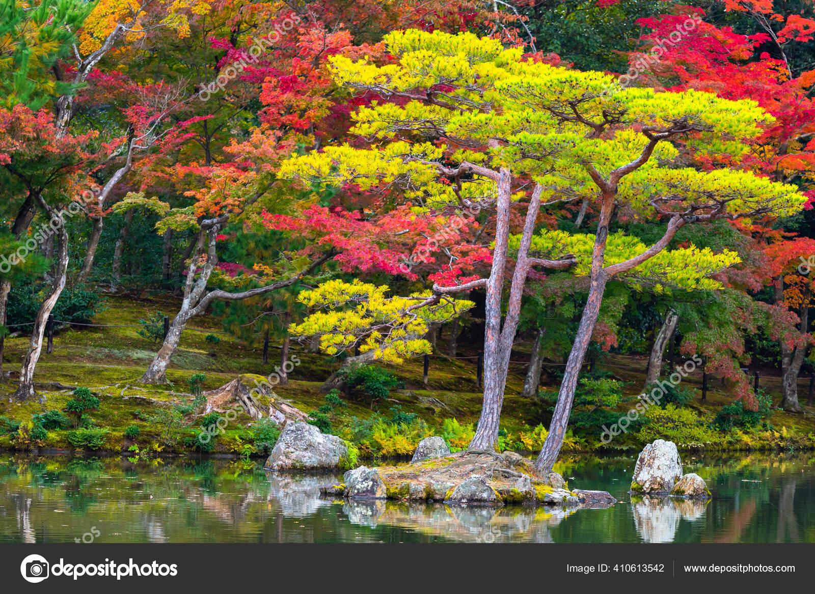 Autumn Japan Nature Japan Autumn Autumn Landscape Japanese Maples Pines Stock Photo C Grinphoto 410613542