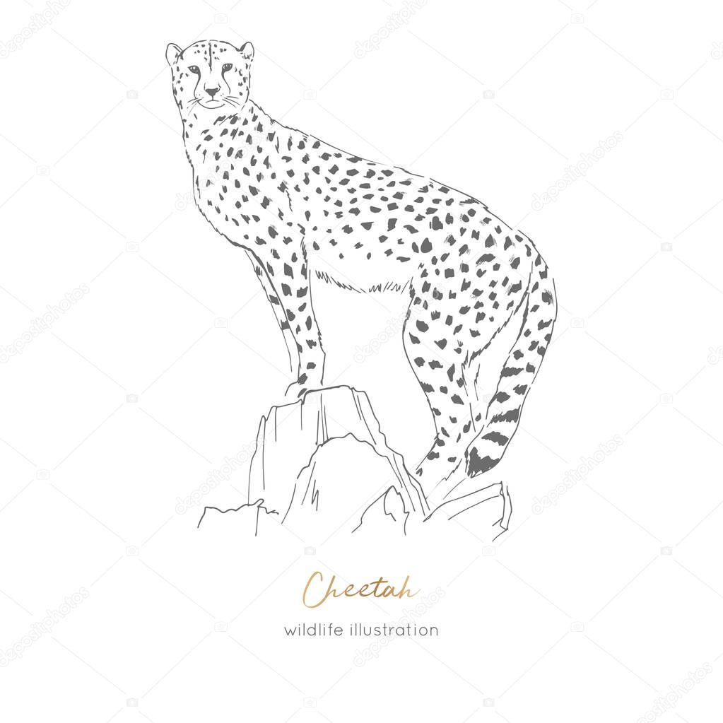 Vector illustration of cheetah standing on dry tree.