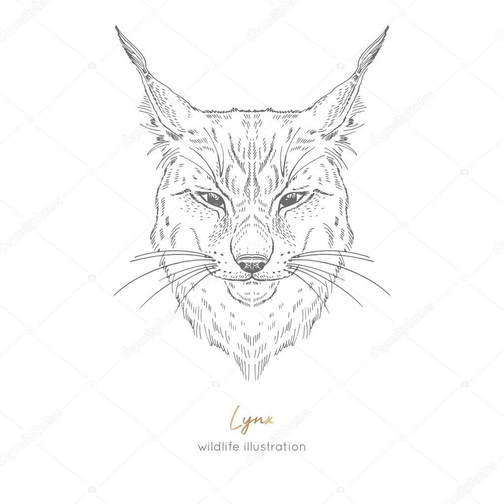 Symmetrical Vector portrait illustration of lynx.