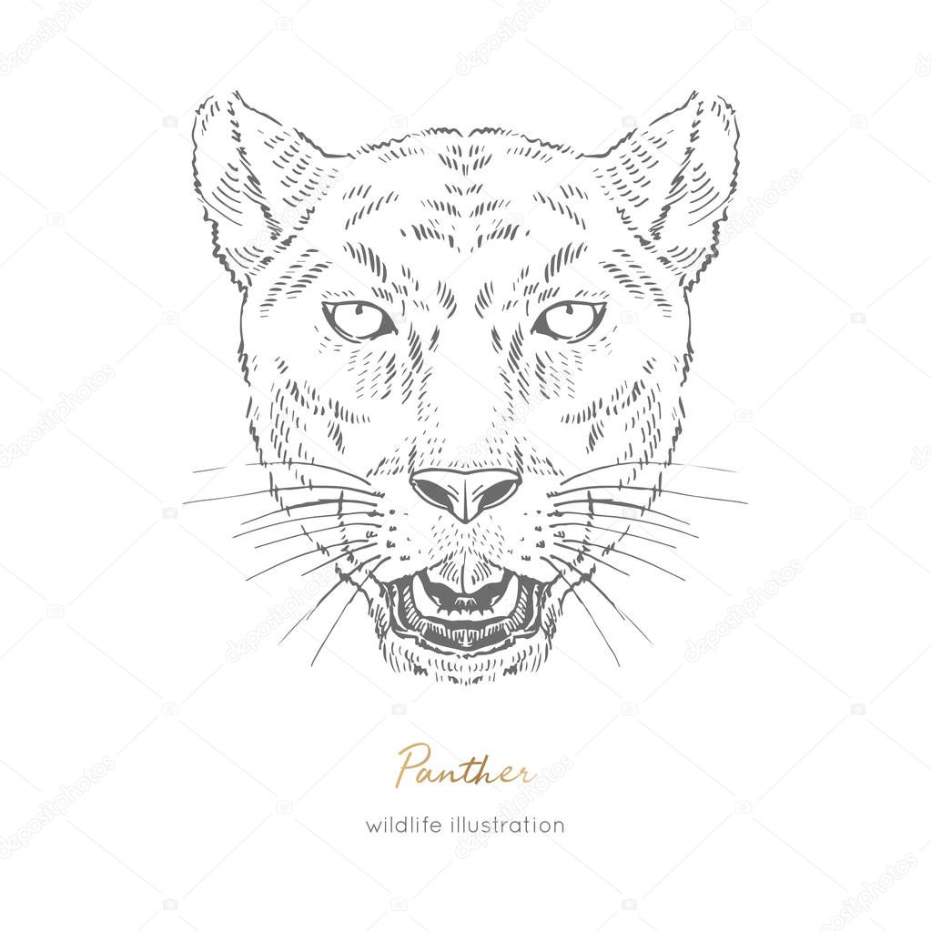 Symmetrical Vector Portrait Illustration Of Roaring Black Panther Hand Drawn Ink Realistic Sketching Isolated On White Perfect For Logo Branding T Shirt Coloring Book Design Premium Vector In Adobe Illustrator Ai