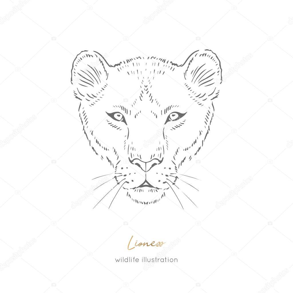 Symmetrical Vector portrait illustration of wild lioness cat.