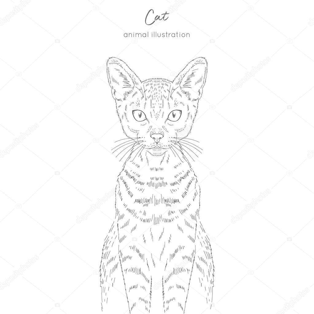 Symmetrical Vector portrait illustration of cat.