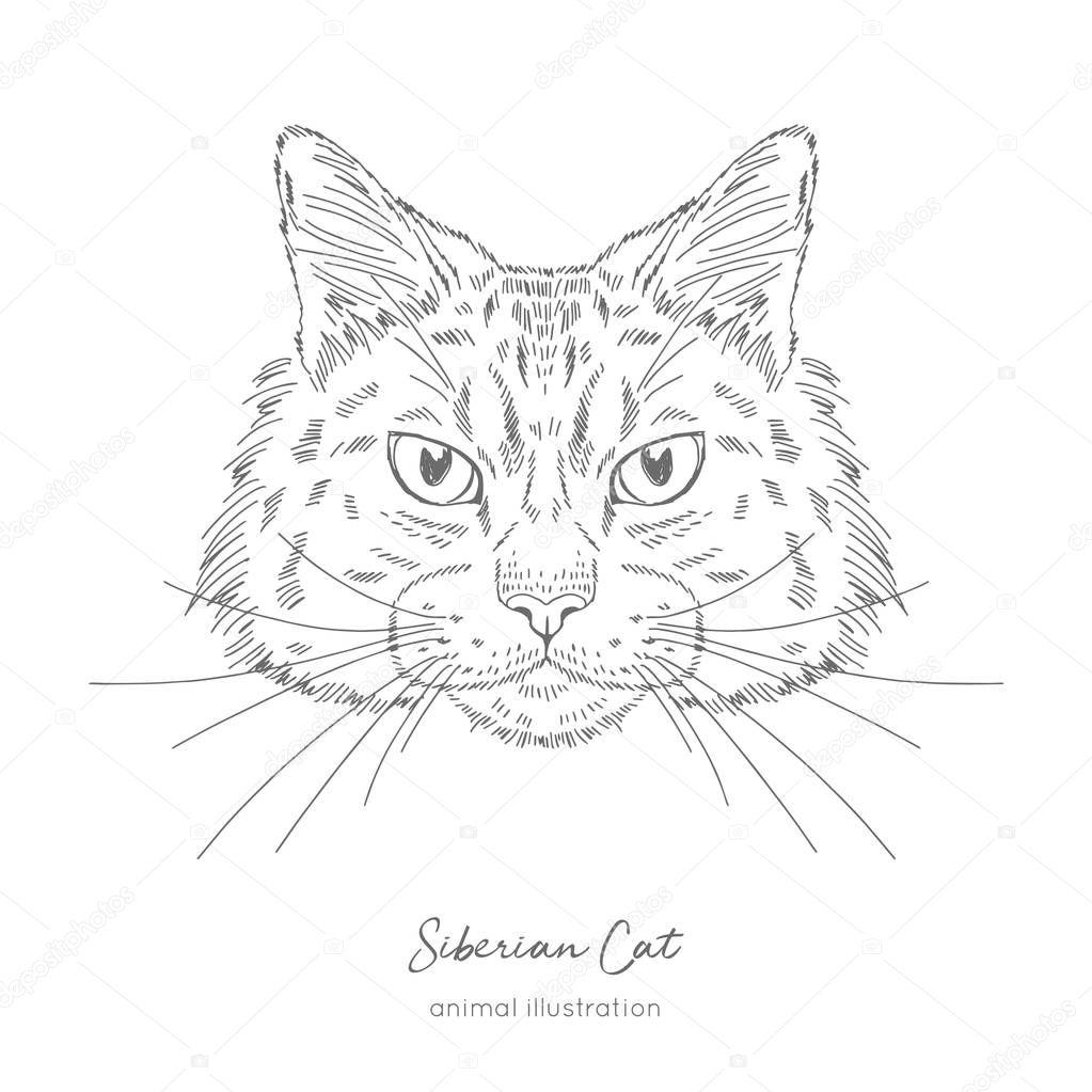 Symmetrical Vector portrait illustration of Siberian cat.