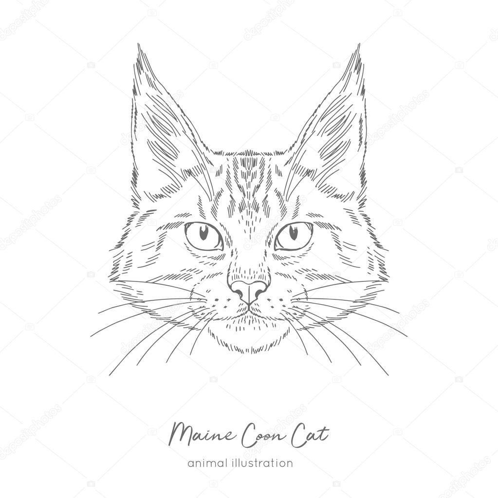 Symmetrical Vector portrait illustration of Maine Coon cat.
