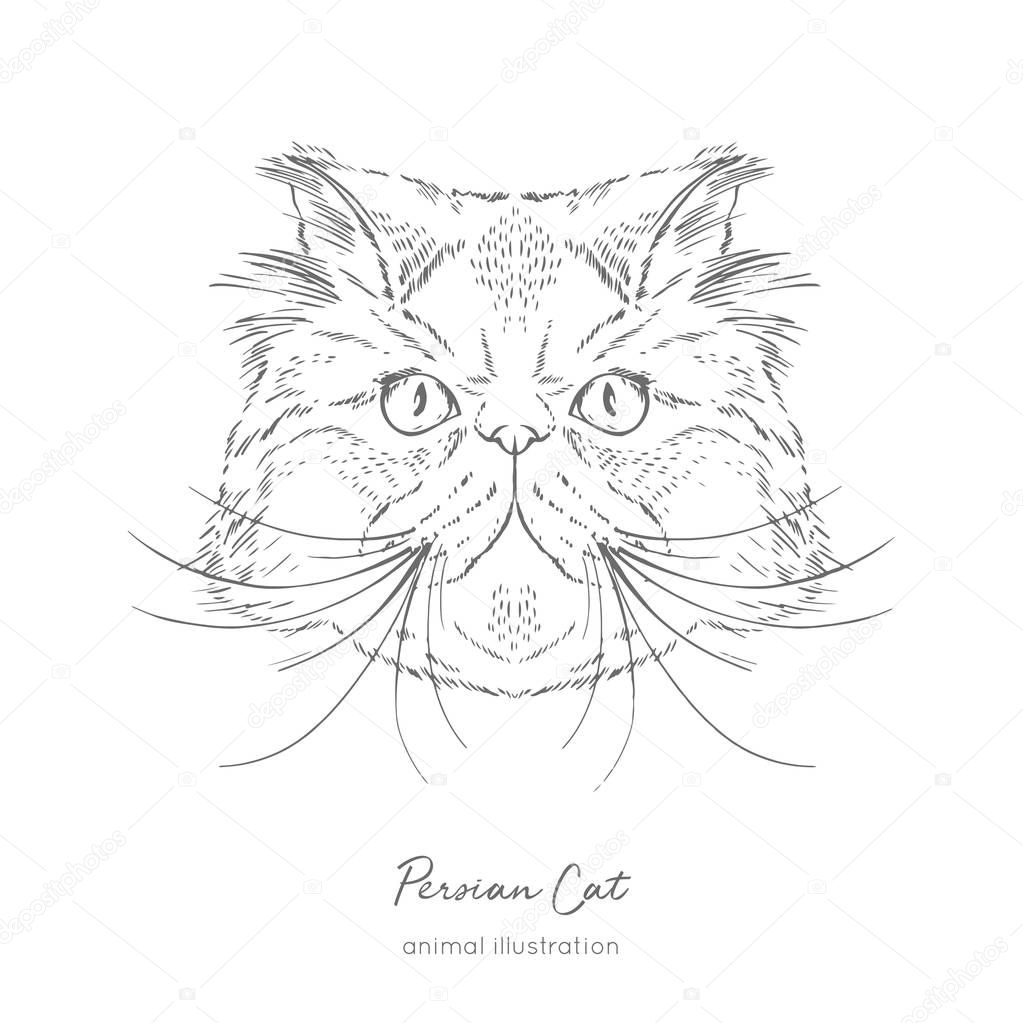 Symmetrical Vector portrait illustration of Persian cat.