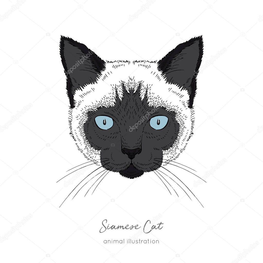 Symmetrical Vector portrait illustration of Siamese cat.