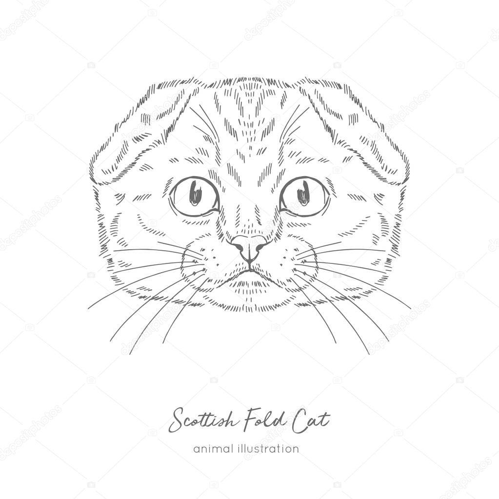 Symmetrical Vector portrait illustration of Scottish Fold cat.