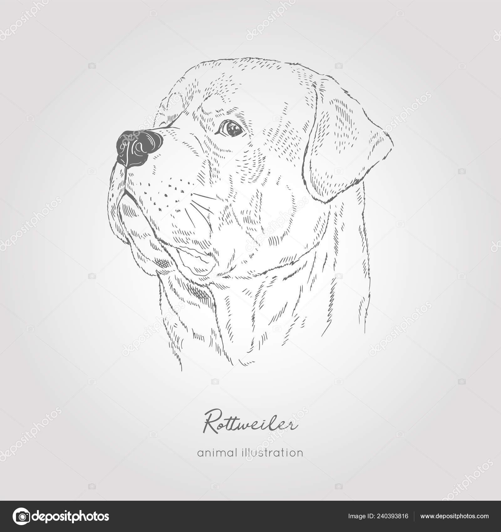 Coloriage Chien Realiste.Illustration De Portrait Profil Vectorielle De La Race De
