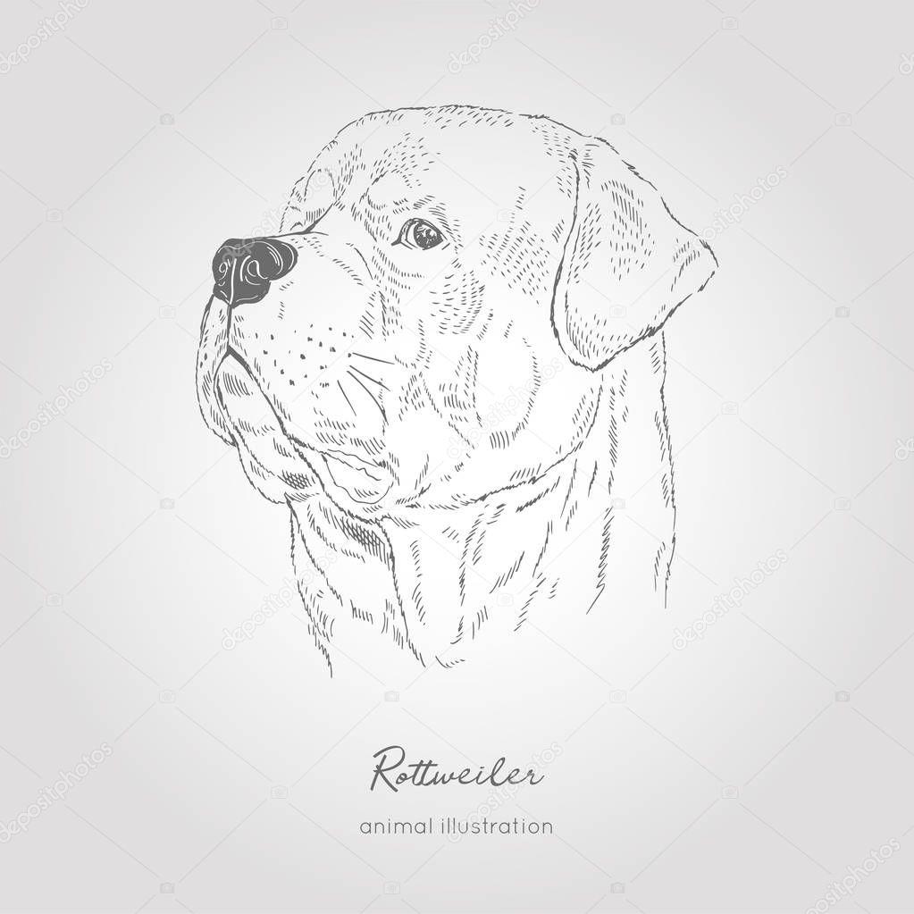 Vector profile portrait illustration of Rottweiler dog breed