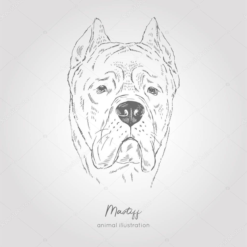 Vector portrait illustration of Bull Mastiff dog breed