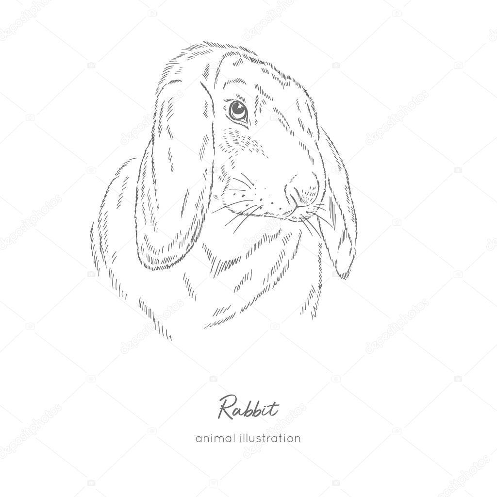 Vector portrait illustration of rabbit farm animal