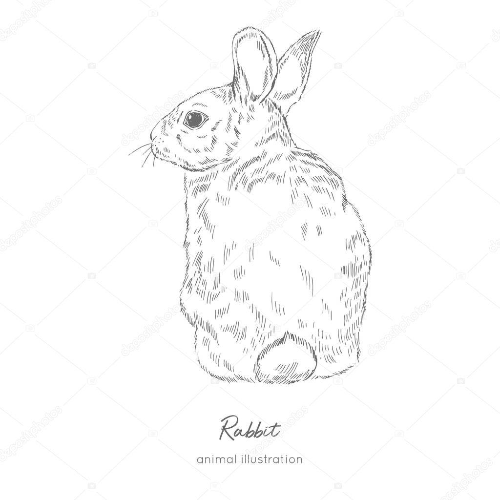 Vector illustration of rabbit farm animal