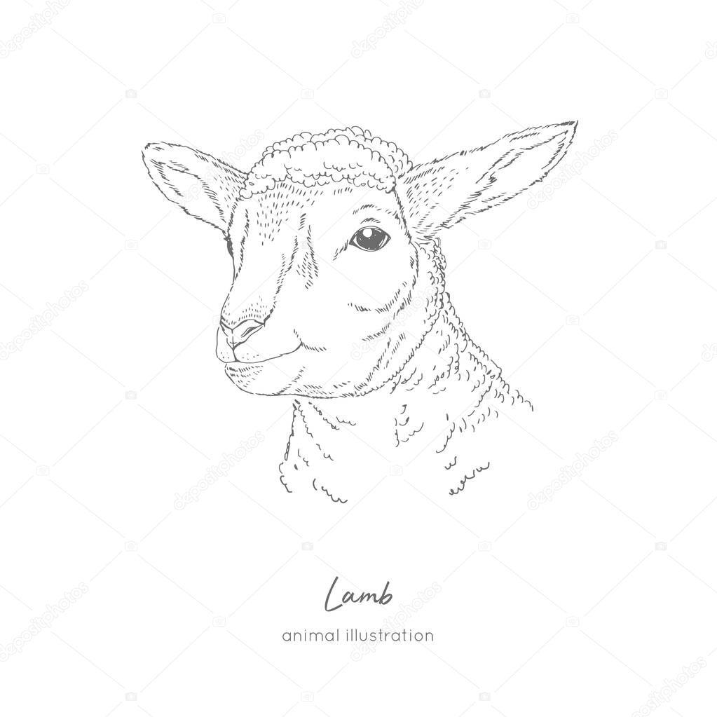Vector portrait illustration of lamb farm animal