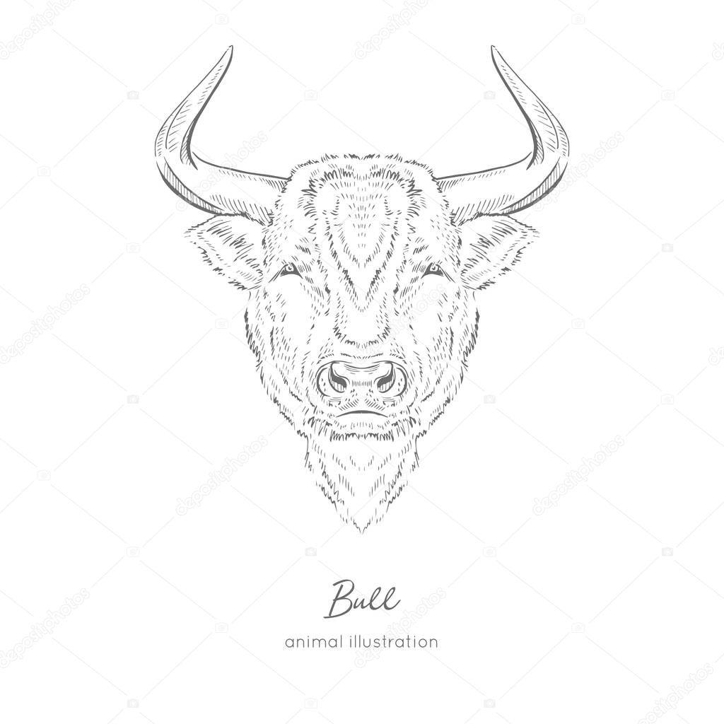Symmetrical Vector portrait illustration of bull farm animal
