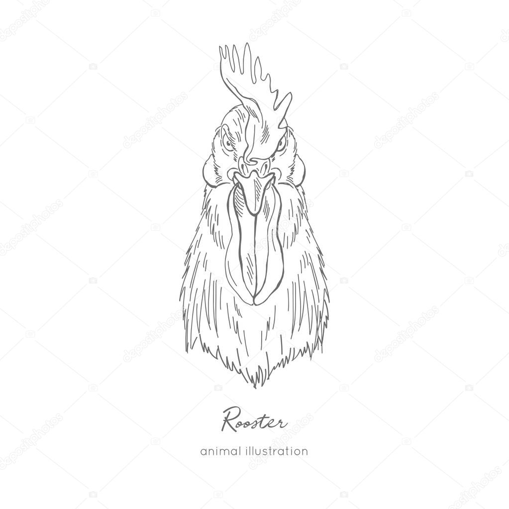 Front view Vector portrait illustration of rooster bird
